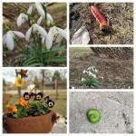 Vendégház tavasz kezdet